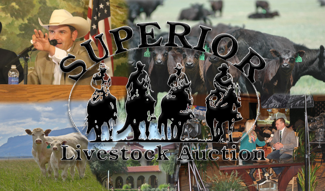 Superior Livestock